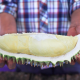 Durian Scam During Thailand's Bumper Harvest