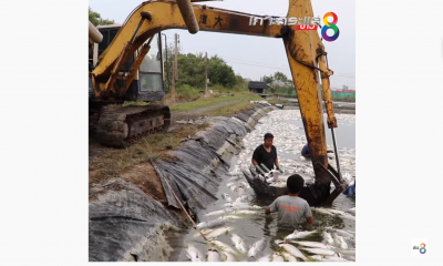 Fish Farmers lose over 3 million Baht in Salmon