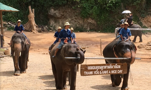 Chiang Mai Elephant Camp Converts Elephant Dung into $$$–VIDEO